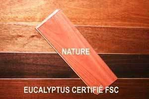 2eucalyptus2
