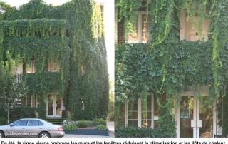 1vignes_facade copy