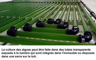 1_tubes_algues